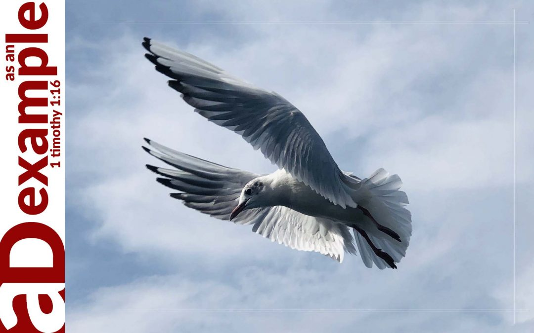 A Confessing Community: The Holy Spirit's Work